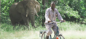 Elephant Bike Banner
